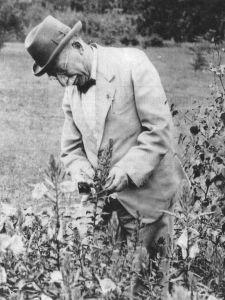 dr. Jac. P. Thijsse